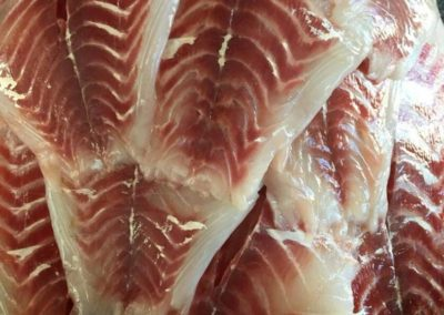 Sheepshead Fillets