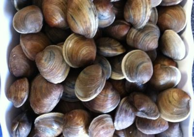 Middle Neck Clams